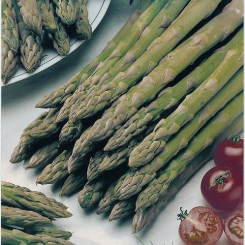 Asparagus Connover's Colossal - Appx 250 Seeds
